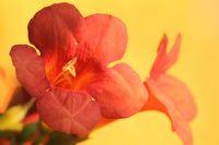 Çiçek :)