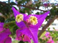 Çiçek İçinde Çiçek
