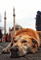 Ortaköy Sakinleri