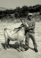 Çobanla Keçisi
