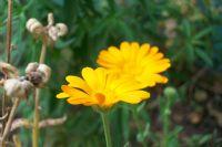 İki Sarı Çiçek