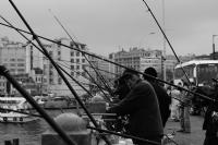 Amatör Balıkçı
