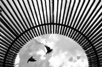 ... ::: Kuş Zamanı ::: ...