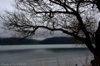 Çıldır Gölü Ve Yalnız Ağaç