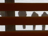 Penceredeki Kuşlar.