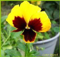 Bu Çiçek Sizler İçin-makro