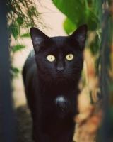Meraklı_kedi