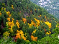 Orman İçinde Kestane Ağaçları, Denizli