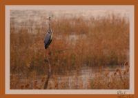 Bafa Gölü Sakinleri
