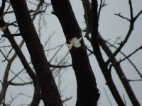 Aldanmış Çiçek....