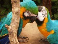 Papağanlar...