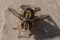Yabani Arıların Doğal Yaşamı