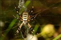 Örümcek 3