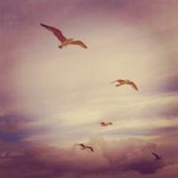 Gönlümdeki Kuşlar..