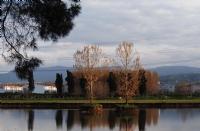 Su Ortasında İki Yalnız Ağaç