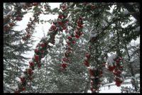 Ankara'da Mart Kar'ı
