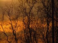 Dalların Arsından Günbatımı