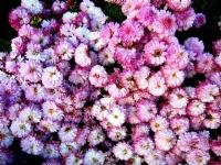 Çiçekler Arasından