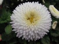 Parkçiçekleri-1
