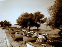 Gölyazı _2