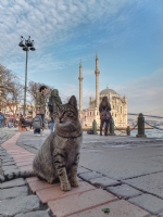 Ortaköy' De Bir Kedi 2