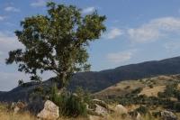 Yalnız Ağaç