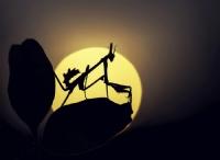 Bir Mantisin Günlüğünden...