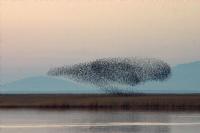 Kuşlar Havalandı.