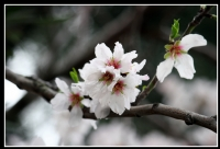 İlkbahar Gibi