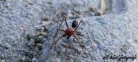 Fotojenik Karınca