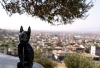 Kedi Ve Şehir