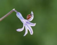 Uğur Böceği 4