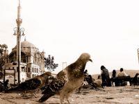 Ortaköye Kuş Bakışı