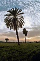 Arabistanın Yeşili De Var