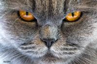 Vahşi bakışlar - Fotoğraf: Yavuz Özdemir