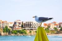 Büyük Kuş