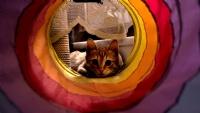Kedi Portresi
