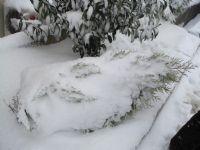 Karlı Günlerden