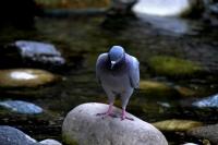 'üsküdar Güvercinleri'