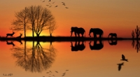 Afrika Hayallerim