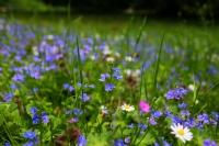 Berlin Tiergarten Mavi Çiçekler