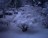 Bir Kış Günü