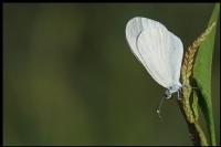 Narin Orman Beyazı