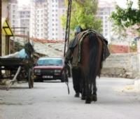 Atıyla Mutlu :)