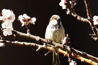 Bahar Ve Kuş