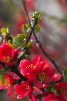 Baharın Eşşiz Güzelliği...