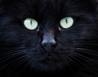 Kedi - Fotoğraf: Mehmet Özıspartalı