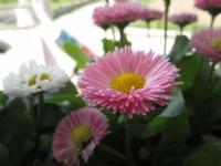 Bahar Vakti Annemin Çiçekleri