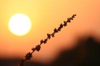 Güneşimsin