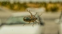 Ekin Böceği